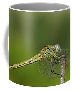 Red-veined Darter Dragonfly Coffee Mug