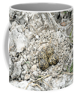 Red-wattled Lapwing Nest Coffee Mug