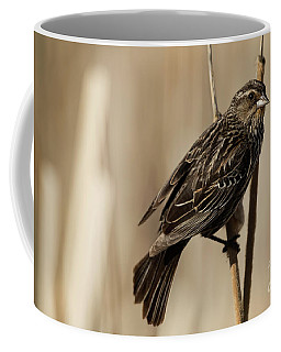 Coffee Mug featuring the photograph Red-winged Blackbird - Female by Brad Allen Fine Art