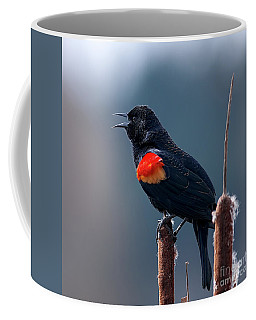 Coffee Mug featuring the photograph Red-winged Blackbird Singing by Sharon Talson