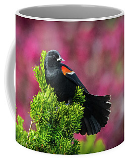 Red Winged Blackbird With Crabapple Blossoms Coffee Mug