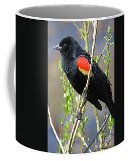Red-winged Perch Coffee Mug