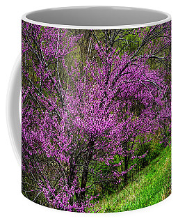 Coffee Mug featuring the photograph Redbud And Path by Thomas R Fletcher