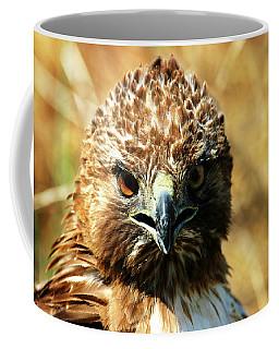 Redtail Hawk Coffee Mug