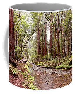 Muir Woods Coffee Mugs Fine Art America