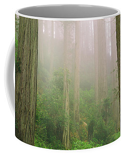 Redwoods Fog Coffee Mug