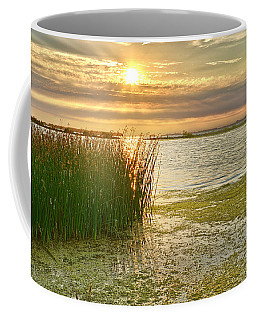 Reeds In The Sunset Coffee Mug