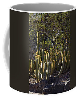 Coffee Mug featuring the photograph Reflecting The Sunshine by Phyllis Denton