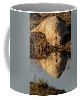 Reflection Of Seal Pup  Coffee Mug