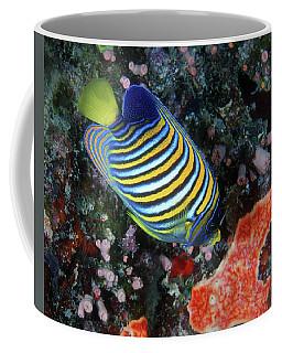 Regal Angelfish, Great Barrier Reef Coffee Mug