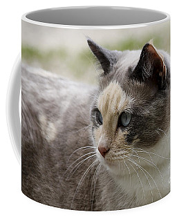 Coffee Mug featuring the photograph Relaxed by Teresa Zieba