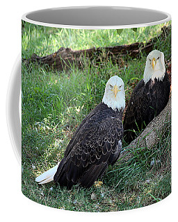 Resting Bald Eagles Coffee Mug