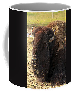Resting Buffalo Coffee Mug