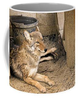 Resting Coyote Coffee Mug