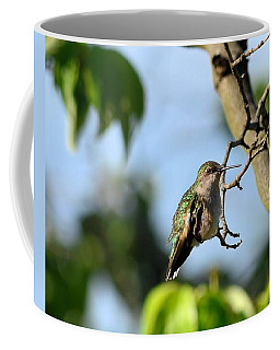 Resting Hummingbird Coffee Mug