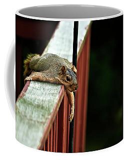 Resting Squirrel Coffee Mug