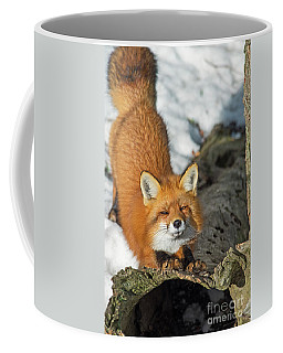 Coffee Mug featuring the photograph Reynard The Fox by Nina Stavlund