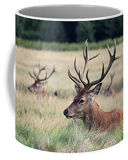Richmond Park Stags Coffee Mug