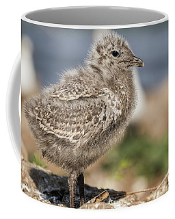 Coffee Mug featuring the photograph Ring-billed Gull Chick 2016-1 by Thomas Young