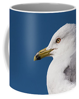 Coffee Mug featuring the photograph Ring-billed Gull Portrait by Onyonet  Photo Studios