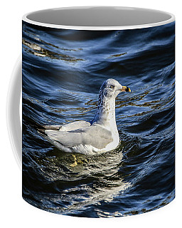 Coffee Mug featuring the photograph Ring Billed Gull by Ray Congrove