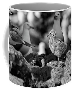 Coffee Mug featuring the photograph Ring-billed Gulls 2016-1 by Thomas Young