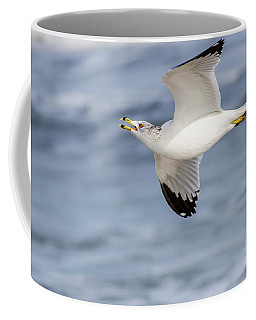 Ring-billed Seagull Looking For Attention Coffee Mug by Debra Martz