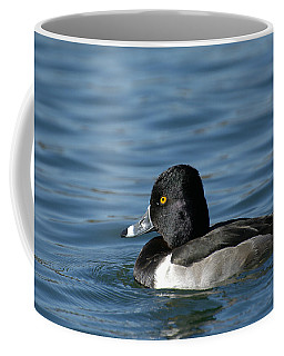 Ring-necked Beauty Coffee Mug by Fraida Gutovich