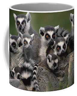 Ring-tailed Lemur Lemur Catta Group Coffee Mug