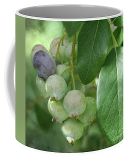 Ripening Blueberries Coffee Mug