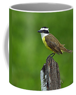 Roadside Kiskadee Coffee Mug