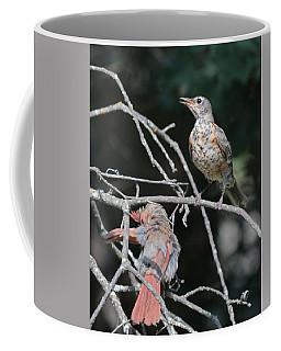 Robin And Cardinal 2664 Coffee Mug