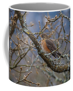 Robin In A Tree Coffee Mug