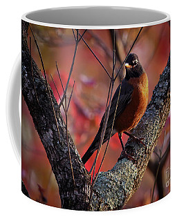 Coffee Mug featuring the photograph Robin In The Dogwood by Douglas Stucky