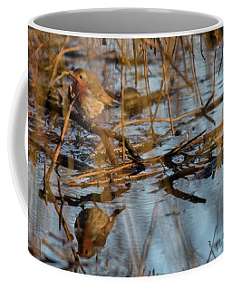 Robin Reflection  Coffee Mug