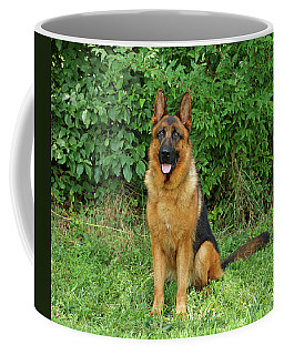 Coffee Mug featuring the photograph Rocco Sitting by Sandy Keeton