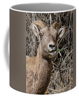 Rocky Mountain Bighorn Ewe Coffee Mug