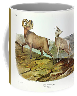Rocky Mountain Sheep Coffee Mug
