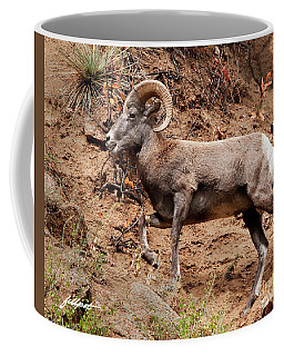 Rocky Mt. Big Horn Sheep Coffee Mug