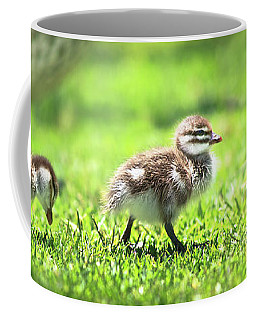 Rogue Duckling, Yanchep National Park Coffee Mug by Dave Catley