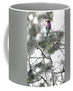 Coffee Mug featuring the photograph Roller Bird On Acacia Limbs by Tom Wurl