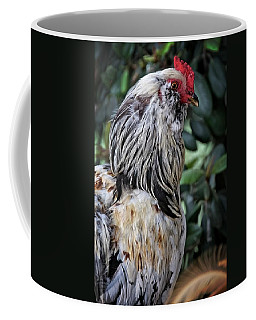 Rooster Plumage, Arroyo Grande, California Coffee Mug
