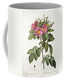 Rosa Carolina Corymbosa Coffee Mug