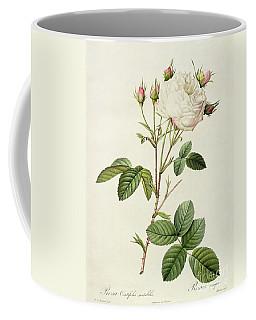 Rosa Centifolia Mutabilis Coffee Mug