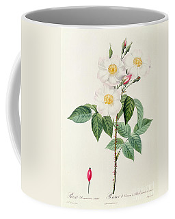 Rosa Damascena Subalba Coffee Mug