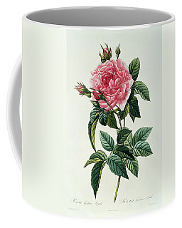 Rosa Gallica Regalis Coffee Mug