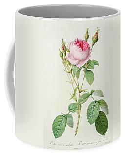 Rosa Muscosa Multiplex Coffee Mug