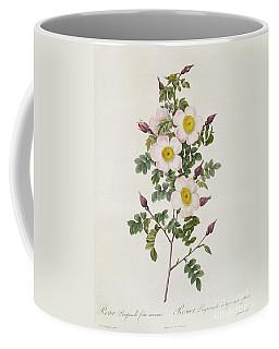 Rosa Pimpinelli Folia Inermis Coffee Mug