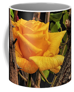 Rose And Thorns Coffee Mug by Charles Ables