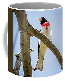 Rose-breasted Grosbeak Looking At You Coffee Mug by Ricky L Jones